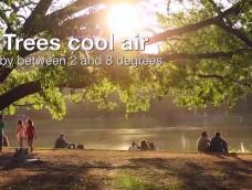 FAO kisfilm magyarul – 2018.03.21 – Az Erdők Világnapja – By HAZAI ERDÉSZ