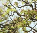 Tavaszt várva: Madárszemmel – A Batsányi kilátó és a Sárosfői Halastavak