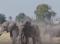 A Vad segélykiáltása – A vadászat szerepe a vadvilág fennmaradásáért! – 206. adás – 2018.03.17-i adás