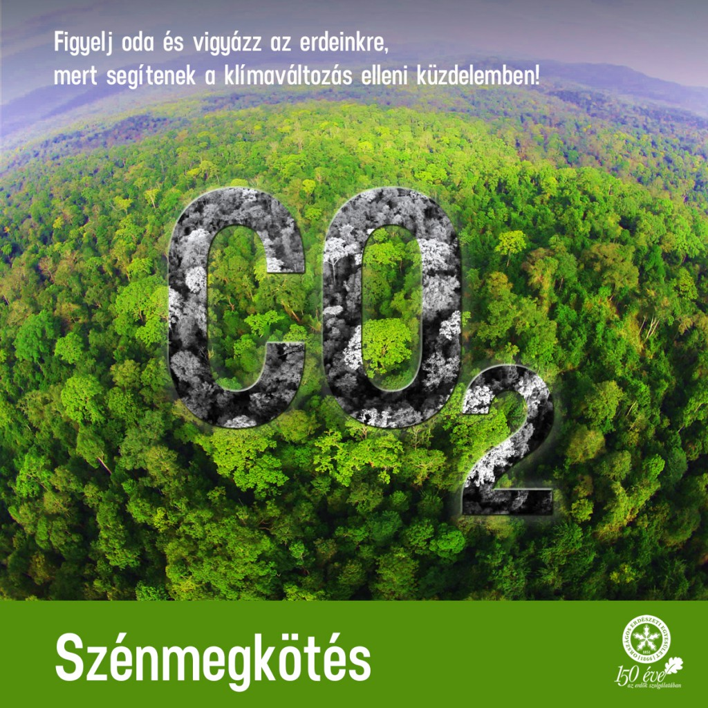 Az erdők szerepe a klímaváltozás hatásainak csökkentésében – Szénmegkötés