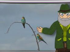 Erdő Ernő Bácsi meséi – Hogyan készítenek fészket a madarak?