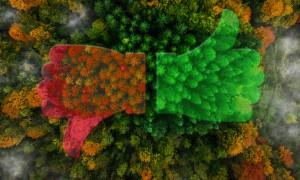 Az erdők szerepére hívja fel a figyelmet a Föld Napján az  Országos Erdészeti Egyesület – 2018.04.20.