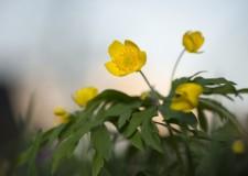 Mi virít itt? – Tavaszi virágzás a Pilisi Parkerdőben – 2018.04.13.