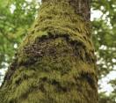 Madárszemmel – Az ébredő erdő