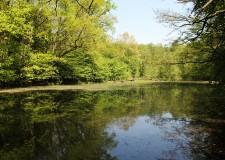KASZÓ Zrt. és NAIK Erdészeti Tudományos Intézet nemzetközi  konferenciát rendez