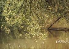 Madárszemmel – A Dráva-folyó és környéke – 2018. május