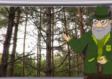 Erdő Ernő Bácsi Meséi – A fenyőfáknak miért nem hullik le télen a levele?