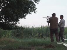 Őzhívás a Bélmegyeri Vadászkastély vadászterületén – 228.adás – 2018.08.18