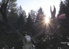 HAZAI VADÁSZ – ZÖLD VILÁG – REVICZKYVEL AZ ERDŐBEN – Műsorok a hétvégén – 2018.11.09-11– péntek-szombat-vasárnap