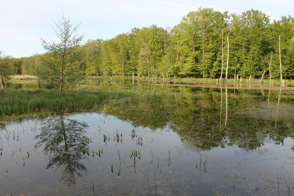 Kűvölgyi 3. tó_SzK