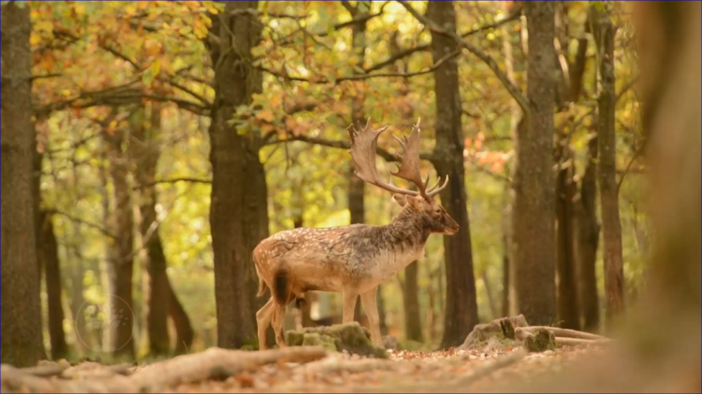 Reviczkyvel az Erdőben – A világhírű gyulaji dám nyomában – 2018.12.09 – vasárnap 12:30 – ECHO-TV