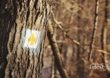 Nemzeti kincsünk az Erdő – Alvó erdő, éber erdész