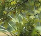 Nemzeti kincsünk az Erdő_Erdők és csapadék