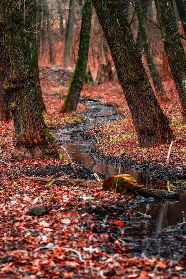 Csörgedező patak Daróci Pál képe