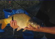Horgászok figyelem: Fontos horgászati változásokra figyelmeztet a NÉBIH!