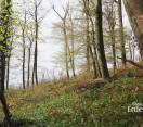 A Szentgáli-tiszafás erdő – VERGA Zrt.