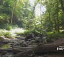 Madárszemmel – Bakonyi erdő – 2019 június