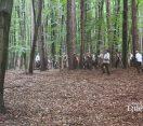 Örökerdő gazdálkodási szakmai nap a Bakonyerdő Zrt.-nél