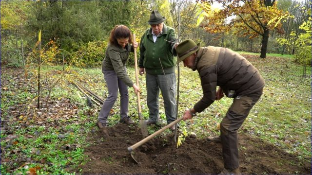 Kecskeméten és Bugacon forgatott a Reviczkyvel az Erdőben stábja