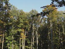 M5 csatorna – Szálalásos és vágásos erdőgazdálkodás – 2. adás – 2019.11.30.