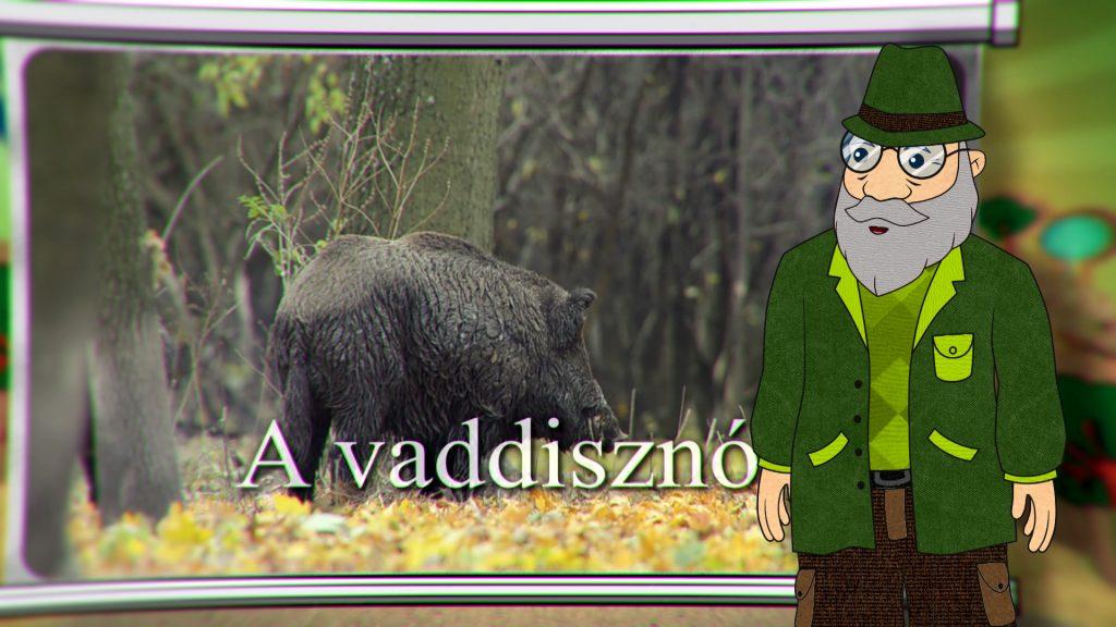 Erdő Ernő Bácsi meséi – Milyen állat a vaddisznó? – 7. adás – 2020.02.01.