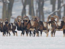 Erdei állatok a téli erdőben – 10. adás – 2020.02.22.