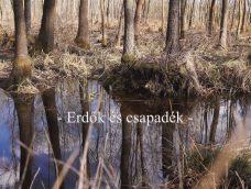 Nemzeti Kincsünk az Erdő – Erdők és csapadék – 10. adás – 2020.02.22.
