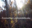 Nemzeti Kincsünk az Erdő – Fenntartható erdőgazdálkodás