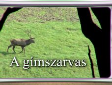 Erdő Ernő Bácsi meséi – Milyen állat a gímszarvas? – 9. adás – 2020.02.15.