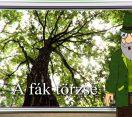 M5 csatorna – Erdő Ernő bácsi meséi – A fák törzse – 2020/10. adás – 2020.04.04.