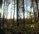 M5 csatorna – Tavaszi és nyári munkák az erdőben – 2020/10. adás – 2020.04.04.