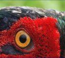Zöldellő erdő, ébredező természet – Előzetes következő műsorunkból: 04.04 szombat 12:30 – M5 TV