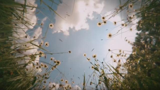 Reviczkyvel az Erdőben – Távol az Anyaországtól – Reel – részlet…