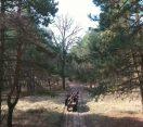 M5 csatorna – Lovaskocsival a Nyíri-erdőben – 2020/10. adás – 2020.04.04.