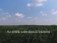 M5 TV – Az erdők szén-dioxid lekötése – 2020/18. adás – 2020.05.30.