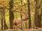 Reviczkyvel az Erdőben – II. évad – 1/12. epizód – A világhírű gyulaji dám nyomában