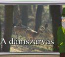 M5 TV – Erdő Ernő bácsi meséi – Milyen állat a dámszarvas? – 2020/39. adás – 2020.10.24.