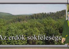 M5 TV – Erdő Ernő bácsi meséi – Az erdők sokfélesége – 2020/44. adás – 2020.11.28.