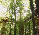 M5 TV – A fák tetején – lombkorona tanösvény Kaszón – 2020/43. adás – 2020.11.21.