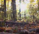 M5 TV – Nemzeti Kincsünk az Erdő – Az erdőgazdálkodás társadalmi hasznai – 2021/2. adás – 2021.01.09.