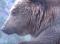 Önkéntesen a Kárpát-medencében és azon is túl… – 5 Medve – Mentőakció – I. rész – 2020 – 3/11