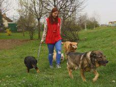 M5 TV – Gazdijogsi – a felelős kutyatartásért – 2021/19. adás – 2021.05.08.