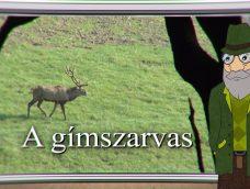 M5 TV – Erdő Ernő bácsi meséi – A gímszarvas – 2021/39. adás – 2021.09.25.